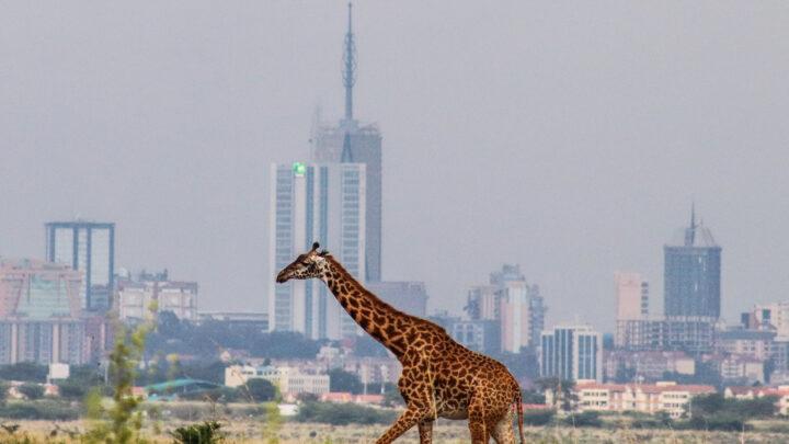Préparer votre séjour au Kenya: n'oubliez pas votre assurance voyage